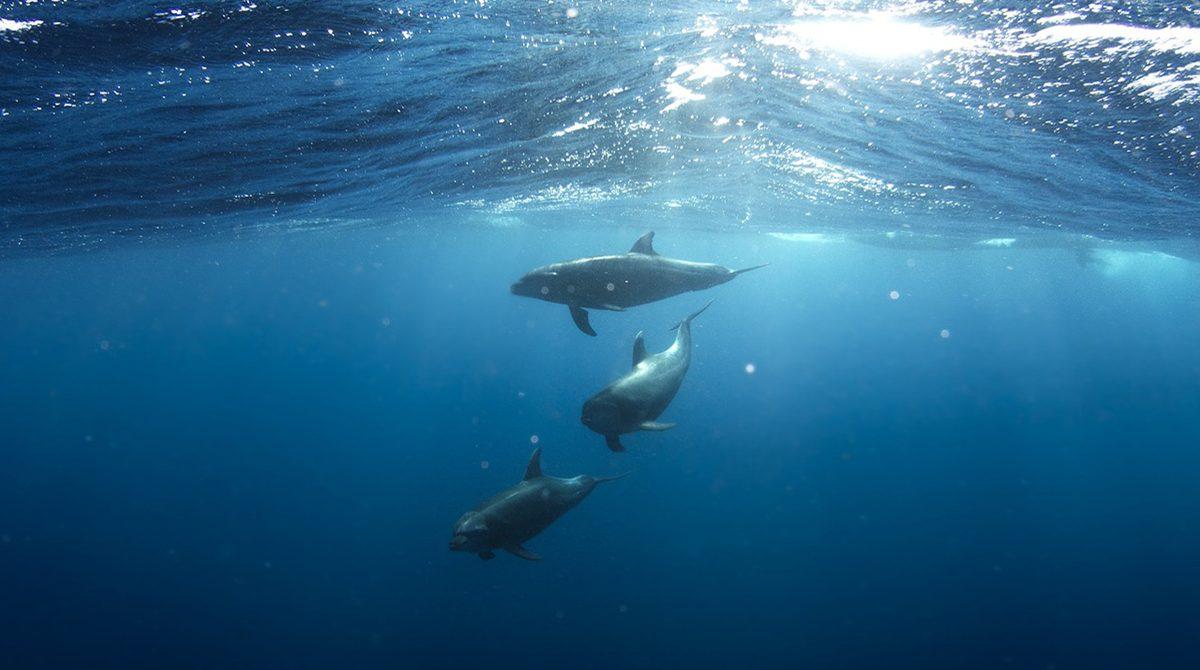 underwater-dolphins-1200x800
